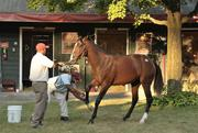 Workers from the Taylor Made barns ready a yearling for the sale.