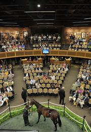 The Fasig-Tipton auctions generated $31.87 million in sales over two days.