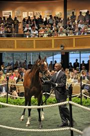 The Fasig-Tipton auctions are a highlight of summer in Saratoga.