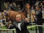 Buyers cash in at Saratoga horse auction