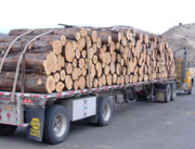 Juniper wood is slightly more dense than ponderosa pine, according to Oregon State University researchers. The wood is also quite hard for a softwood, coming in at about 35 percent harder than ponderosa pine, but only about half as hard as red oak according to OSU.