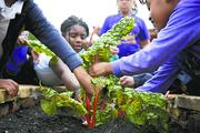 Jones Valley Teaching Farm Nonprofit category  10-word philosophy on community service: A community is best served when there is an equitable education system.  Click here to read their profile   Caption: Jones Valley Teaching Farm offers lessons in gardening to Birmingham City Schools students.