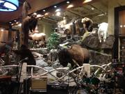 Big game displayed in the new Field & Stream store.