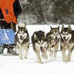 The power of the pack: What business leaders can learn from an Iditarod champion