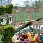 Cider House rules at Epcot's Flower & Garden Fest