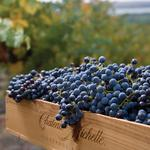 6 Washington wineries named in top 100 wines in the world