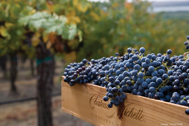 Directors of a winery in Shingle Springs hopes to get its affairs in order and continue on after filing for bankruptcy this month in U.S. Bankruptcy Court, Eastern District of California.