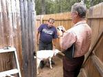 Goat owners sue Western Mass. town: 'They are just like humans'