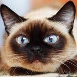 5 things to know today, and another reason to post cat photos on Facebook