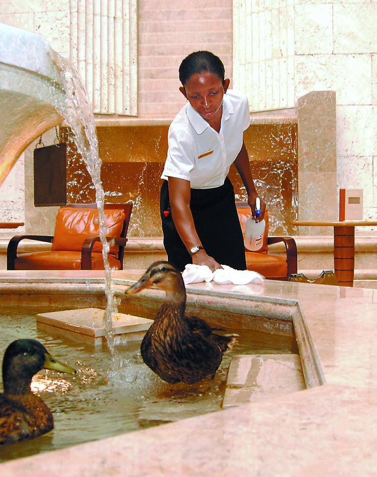 Word is the Peabody Orlando ducks will be packing their bags and flying north after Hyatt takes over the hotel in October.