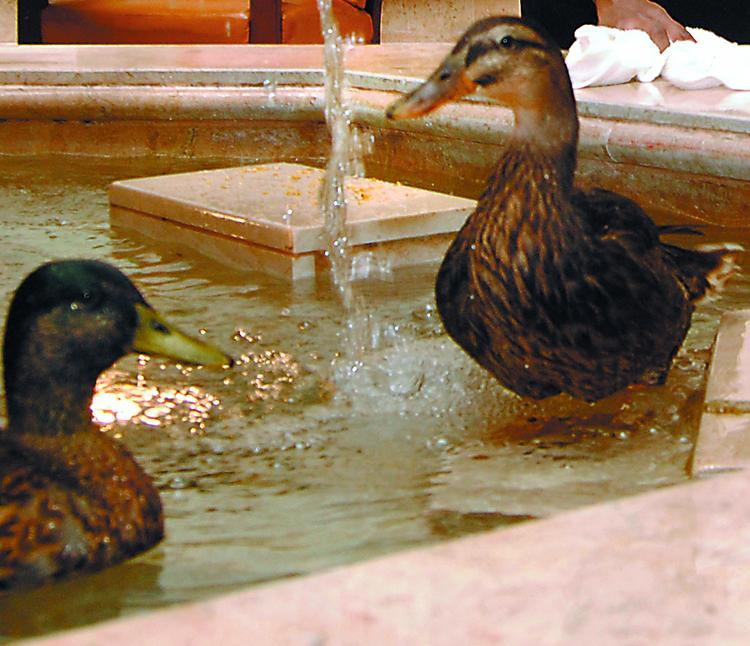 Don't miss the final walk of The Peabody ducks on Sept. 30.
