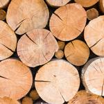 Alabama should harness the power of its timber