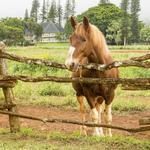 ​Four Seasons Resort Lanai opens adventure center to dispel myth of 'nothing to do' on Lanai
