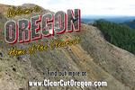 Enviros want clear cut answers on clearcutting