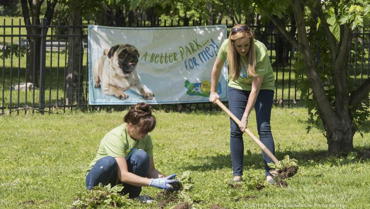 On May 19, a crew of more than 25 volunteers worked to plant bushes, trim trees and landscape in the Frenchtown Dog Park in St. Louis' Soulard neighborhood. Among the volunteer group was Nestle Purina PetCare's Beneful team, who kicked off the 2016 Dream Dog Park Project here as part of its year-long program to support the renovation and creation of community dog parks across the country.