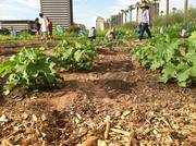 Volunteers weed and cultivate crops on the Central Phoenix property.