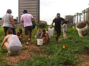 Community volunteers water plants at one of the community gardens. Garden plots are available for free through Keep Phoenix Beautiful.