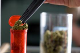 An employee puts a bud of medical marijuana inside a tube for a customer at a medical marijuana dispensary in Denver.