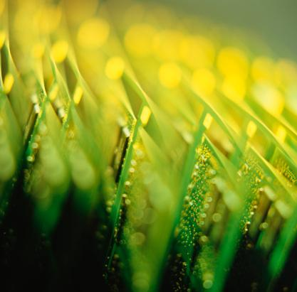 The Semiconductor Industry Association reported a drop in June global sales of computer chips.