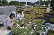 Bowden and Walck in the restaurant's rooftop garden, a first-year experiment.