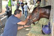Mike Repole, co-founder of vitaminwater, feeds carrots to Caixa Eletronica. Repole bought the horse in 2011 for $62,500. This year alone, Caixa Eletronica has won $945,000 for Repole.