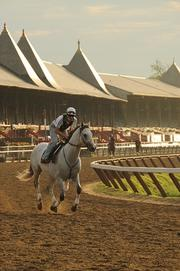 Typically, Billy Fuccillo heads to Saratoga Race Course by 6:30 every morning, where he takes his coffee and watches the thoroughbreds work out before heading off to work himself. Schedule permitting, Fuccillo makes it back to the track for the last two races of the day. This year he didn't make it to the track as often.
