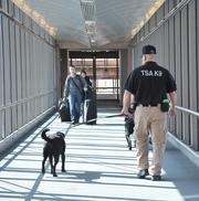 Lonnie Acosta an explosives detection canine handler for the TSA, taking Zelda, a Labrador trained to sniff for explosives, outside for a break.