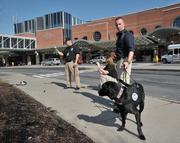 Michael Delia (front right) with 2-year-old Seven; and Lonnie Acosta with 3-year-old Zelda. The men are explosives detection canine handlers with the TSA. The Labrador retrievers are trained to detect explosives.