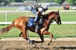 Cuomo to make NYRA changes after Saratoga meet