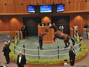 A colt consigned by Taylor Made Sales Agency in Kentucky rears up during the horse sales in Saratoga Springs. The yearling was not sold.