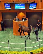 Big buys can't buoy first night of Saratoga horse auctions