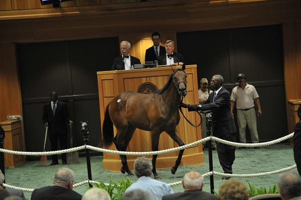 Fasig-Tipton will auction 260 New York-bred horses Aug. 11-12 at its  sales pavilion in Saratoga Springs.