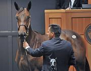 A farm owned by Australian Paul Fudge bought this filly for $900,000.
