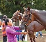 Trainers balk at visa restrictions on backstretch workers