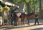 Class act: Saratoga sale attracts rich and famous