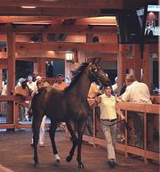 A yearling consigned by McMahon of Saratoga Thoroughbreds is shown before entering the auction ring in Saratoga Springs.