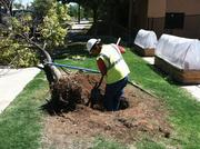 To celebrate its 40th year in business, Heads Up Landscape Contractors is committing to donate and plant 40 trees over the course of 40 weeks at community sites throughout the Albuquerque and Santa Fe areas. The landscape firm's CEO, Gary Mallory, said the locations were chosen in collaboration with customers and followers on Facebook and Twitter. The company coordinated with the stewards of each site to ensure that the trees, once planted, would receive proper care and irrigation. The company employs 250 people through its Albuquerque headquarters.