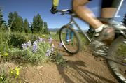 Top PhotosAngel Fire to add 20 miles of new biking trailsAngel Fire Resort hopes to attract more mountain bikers of various skill levels.