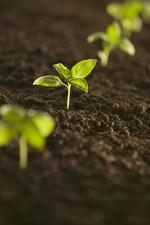 N.C. agribusiness sprouting higher, study finds