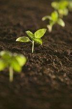 Birmingham region contributes to $70B agriculture industries