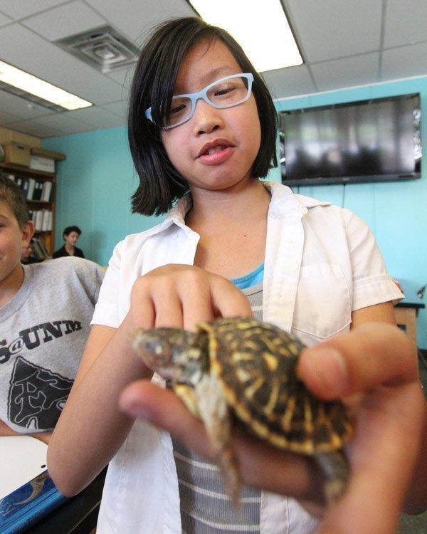Sixth grade student Mei Li, age 12, studies her science class' Western box turtle.