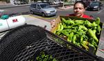 Green chile catching on beyond NM borders