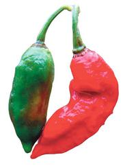 Jolokia peppers