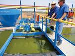 El Dorado sells algae as Jal-grown 'Jalgae'