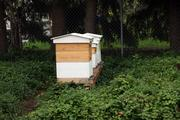 These Bee Local hives live in a back yard on Northeast 42nd Avenue in Portland.