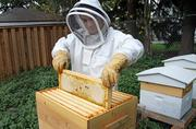 Each hive will produce between 50 and 80 pounds of honey.