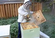 Bee Local ended the season with 20 active hives and has plans to expand to new cities, includingSeattle, Austin, Texas, and New York.