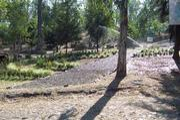 Jardin Portland today.