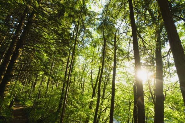 Ecotrust Forest Management was named to the ImpactAssets 50 list of the most prominent impact investors.