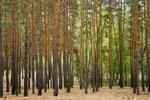 Northwest Energy plans $300M Oregon biomass investment